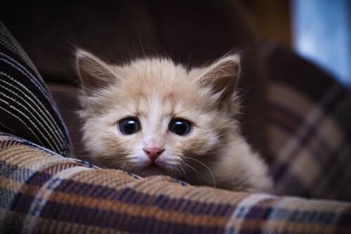 giardiasis en gatos sintomas