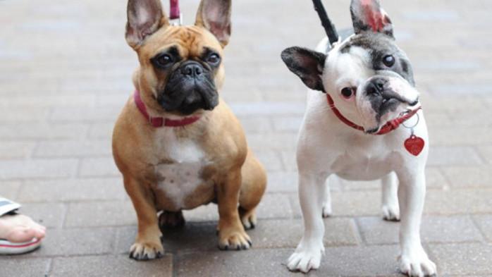 remedios naturales para la tos en perros