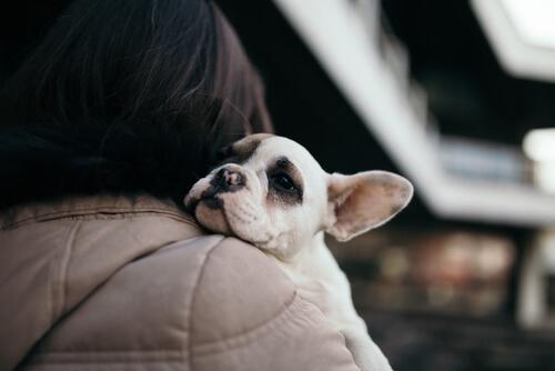 Dónde Puedo Adoptar Un Perro En Madrid Descubre Todos Los Sitios