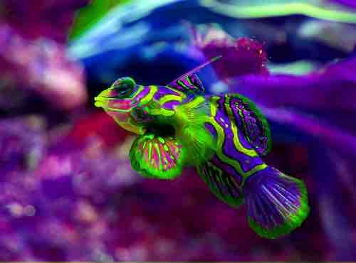 peces de acuario baratos