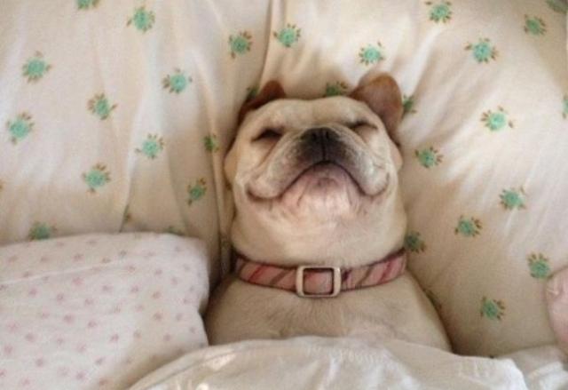 problemas de riñon en perros sintomas