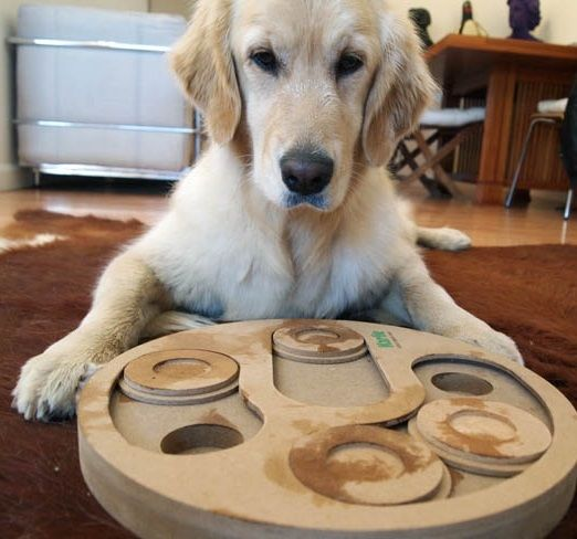 Descubre Los Mejores Juegos De Inteligencia Para Perros Wakyma