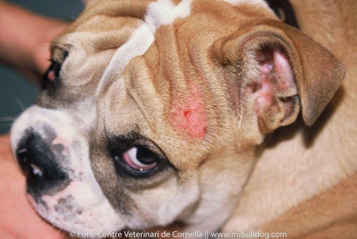 sintomas de un perro sarna