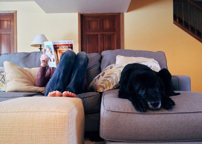 Mascotas en el hogar: ¿qué mascota elijo según el espacio de mi casa?