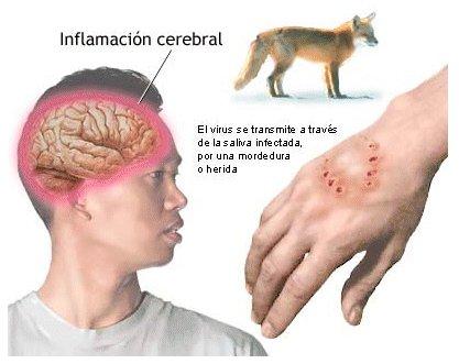 Tratamiento de la Rabia Canina: Consejos y Prevención   Wakyma