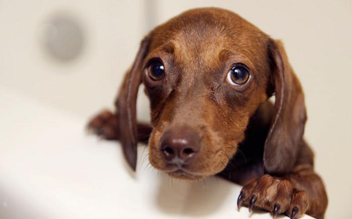 que hacer si tienes alergia a los perros
