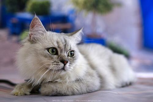 como eliminar la giardia en gatos
