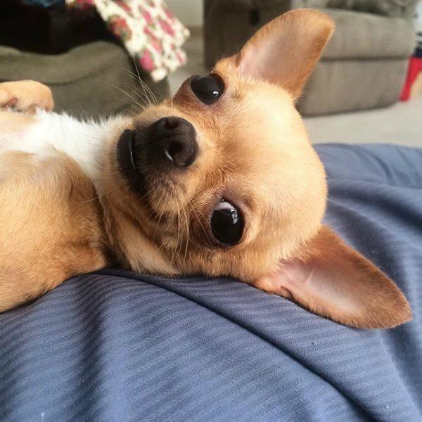 Tratamiento De La Tiña En Perros Te Lo Contamos Todo Wakyma