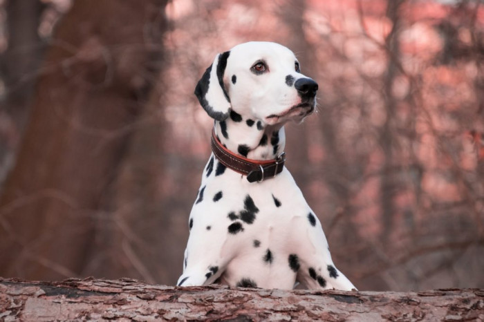 remedios caseros para las pulgas de los perros con vinagre