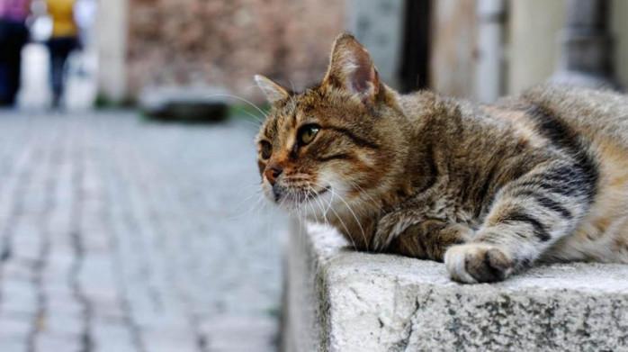 sintomas de la sarna en gatos